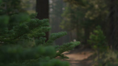 Pull focus shot of a mountain biker riding on a path in a forest. - stock footage