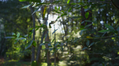 The sun filters through leaves in a forest. Stock Footage