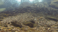 Underwater nook on walking trail fish tank  - stock footage