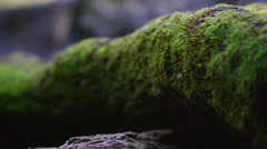 Pull focus shot of a moss covered log. Stock Footage