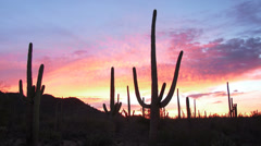 4K Saguaro National Park Sunrise Stock Footage