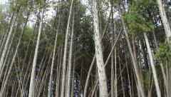 Tall Skinny Trees - stock footage