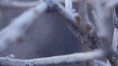 Desert bush branches macro texture 1 Stock Footage