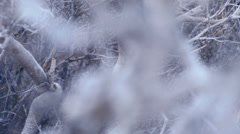 Desert bush branches macro texture 3 Stock Footage