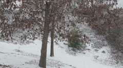 First Snow Scene with Us Flag waving into the scene Stock Footage