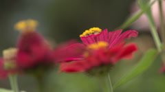 Some withered flowers Stock Footage