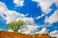 Green tree and blu cluody sky Stock Photos