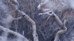Desert bush branches macro texture 2 Stock Footage