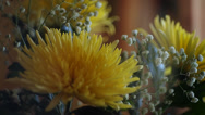 Stock Video Footage of bouquet of yellow chrysanthemums