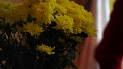 morning with flowers - stock footage
