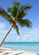 Karibian rannalla, Dominikaaninen tasavalta Kuvituskuvat