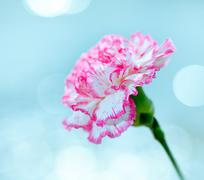 flower on a bright background with glare. - stock photo
