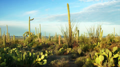 4K Saguaro National Park Stock Footage