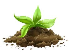 Plant with green leaves growing from the ground Stock Illustration