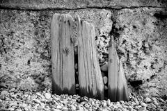 Remains of wooden groynes Stock Photos