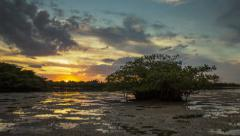 Mangrove Tree Sunset Singer Island Lake Worth Lagoon Palm Beach County Florida Stock Footage