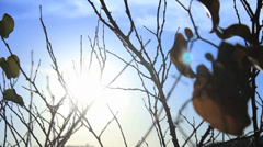 Lake Sunset Peaking Through Tree Branches and Leaves Blowing in the Wind - stock footage