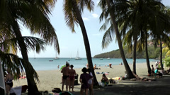 Guadeloupe Basse Terre district 050 beach seen through many palm trees Stock Footage
