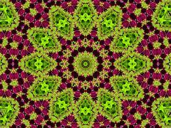 chrysanthemum natural pattern - stock illustration