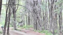 Walking in the Wood Stock Footage