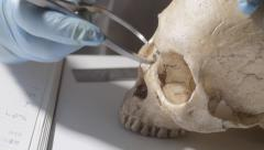 Scientist, technician, measuring human skull - stock footage