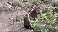 monkey - stock footage