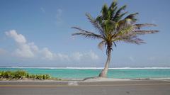 Palm Tree on a Beach Stock Footage