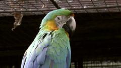 Catalina macaw bird Stock Footage