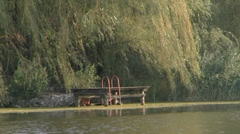 Weeping willow and wooden dock - stock footage