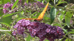 Butterfly on Flowers Stock Footage