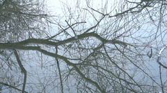 Reflection of a tree in the water, stone hit the water in slow motion Stock Footage