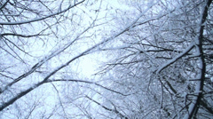 Snow falls from a branch in the forest in slow motion Stock Footage