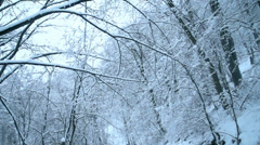 Winter landscape in the forest, snow falls from the heavy branch in slow motion Stock Footage