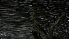 4K Startrails Forest 09 Perseids Timelapse Bristlecone Pine Forest Stock Footage