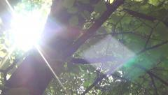 Walking in Spring Forest, Wood, Sunlight, Sunshine in Park, POV in Foliage Stock Footage