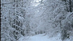 Winter landscape, snow falls from the trees in the forest Stock Footage