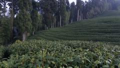 Green Tea Farm Stock Footage