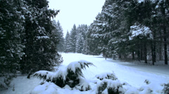 Winter landscape.Snow rain in the pine forest Stock Footage