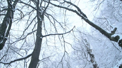 Winter landscape.Snow falls in the forest Stock Footage