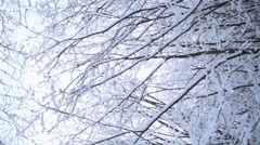 Winter landscape, snow falls from the trees in the forest - stock footage