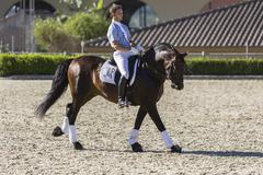 Spanish horse of pure race taking part during an exercise of equestrian morph Stock Photos