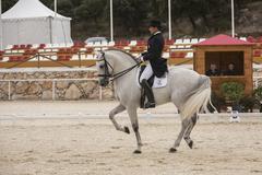 spanish purebred horse competing in dressage competition classic in la beata, - stock photo