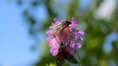 Colorful butterflies on the wild purple flower in nature Stock Footage