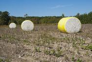 Stock Photo of cotton bales