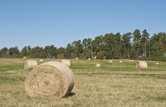 sc uplands hayfield - stock photo