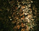 Stock Photo of blurred tree bark