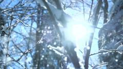 snow falling in slow motion. trees woods forest - stock footage