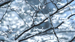 snow tree. slow motion. winter background - stock footage
