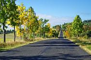 Stock Photo of asphalt road among trees with leaves in autumn colors