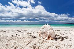 Seashell on tropical beach, boracay Stock Photos
